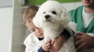 Little veterinarian and dog video