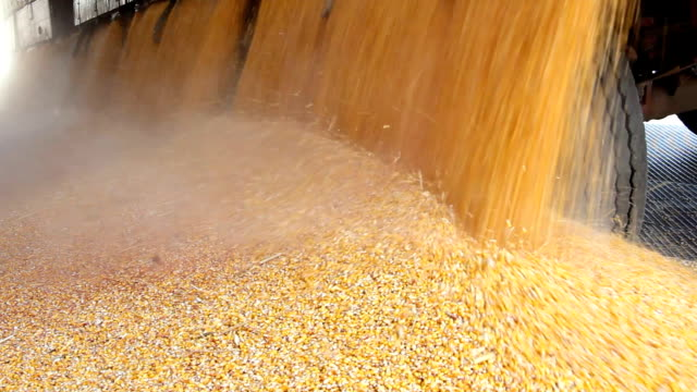 Loading Corn into the Silo video