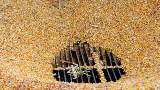 Loading Corn into the Silo video