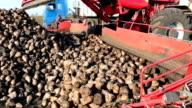 Loading sugar beet truck video