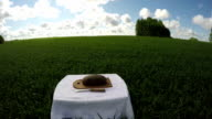 A loaf of bread in wheat field, time lapse video