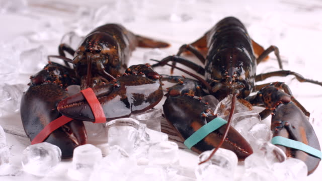 Lobster with tied claws moving. video