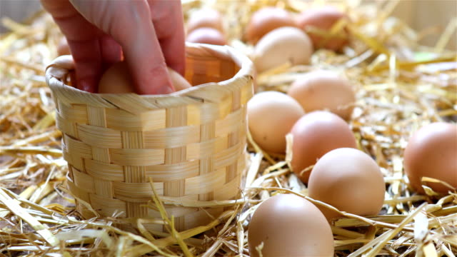 Local farmer collects eggs from chicken coop video