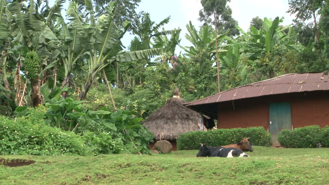 Local house in tropical rainforest video