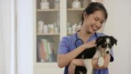 Local Veterinarian video