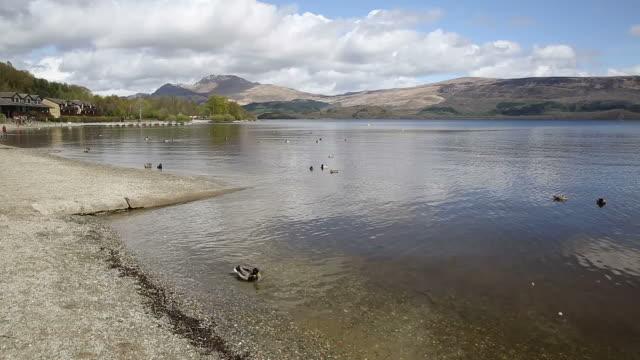 Loch Lomond Scotland UK ducks swimming and mountains pan video
