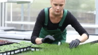 Lockdown shot of farmer examining saplings video