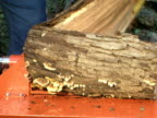 Log Splitter 4 video