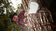 SLO MO Logger cutting into a tree with chainsaw video