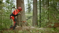 SLO MO Logger felling a tree using wedges video