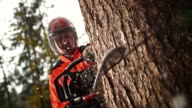 SLO MO Logger making a cut into tree with chainsaw video