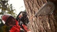 SLO MO Logger making a cut with a chainsaw video