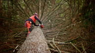 Logger removing branches from fallen tree video