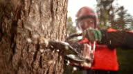 SLO MO LD Logger with chainsaw cutting into a tree video