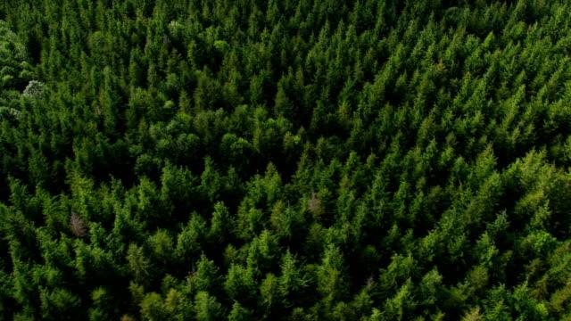 Logging in Oregon forest, aerial shot video