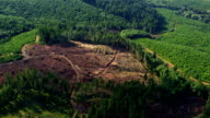 Logging operation in Oregon forest, aerial shot video