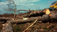Logs at sawmill video
