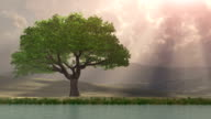 Lone Tree by the water with rays of light video