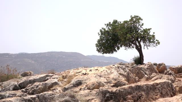 Lone Tree on Top of Mount Arbel Israel video