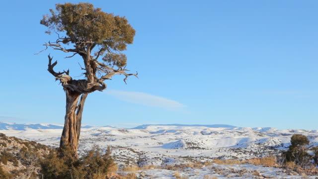 lone tree video