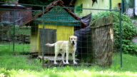 lonely dog in cage video