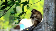 Lonely monkey video