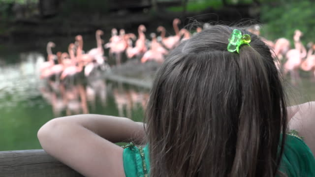 Long Hair of Girl at Zoo video