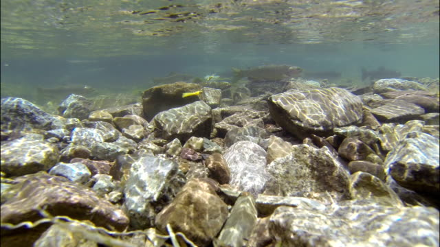 Long Underwater Fishing Glacier Fresh water Snowmass Aspen Maroon Bells Wilderness Fishing video