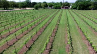 Long Version flying backwards and high angle at the end Aerial Wine to Market or Farm to Market in Austin Texas video