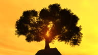 Lonly tree on a cliff at sunset video