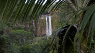 Looking at tropical waterfall from behind of a palm tree . video