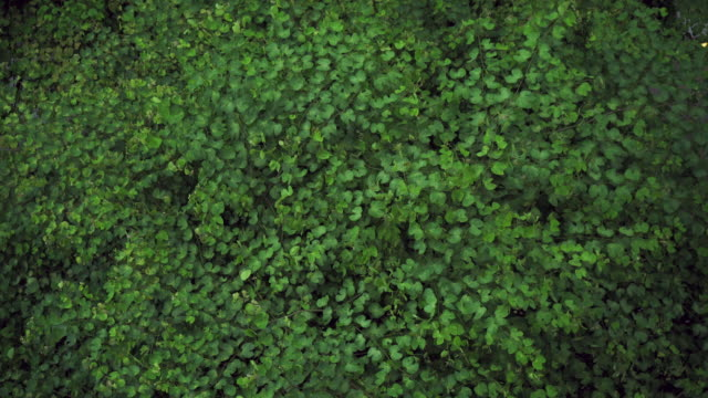 Looking down at green leaves in the woods. video