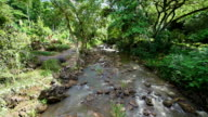 Looking Down Stream in Tropical Jungle video