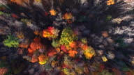 Looking Straight Down on Autumn Colors, Trees, Scenic Forests video