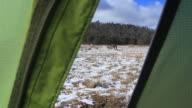 Looking Through Tent Door at Morning Kangaroos video