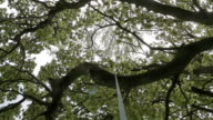 Looking Up From A Rope Swing In To Trees Canopy video