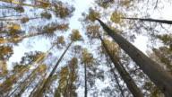 looking up tree in park near hangzhou West Lake 4k video