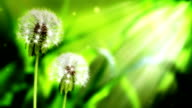 Loopable Dandelion Background video
