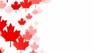 Loopable Maple Leafs over White Background, Canadian Flag, Copy Space video