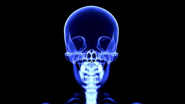 Loopable X-ray skull blue video