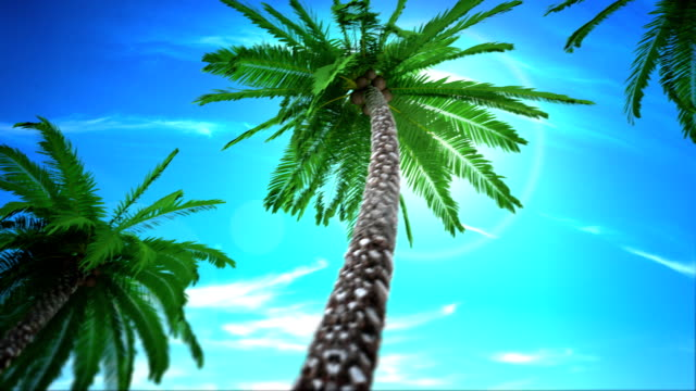 Looping Palm Trees video