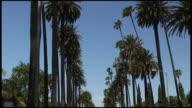 (HD1080i) Los Angeles: Beverly Hills Palm Tree Row video