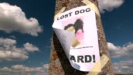 Lost pet sign with dog image on pole video