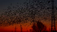 lot of birds with industrial landscape video