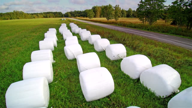 Lots of rolls of white hays on the grass video