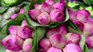 Lotus Flower Buddhism video