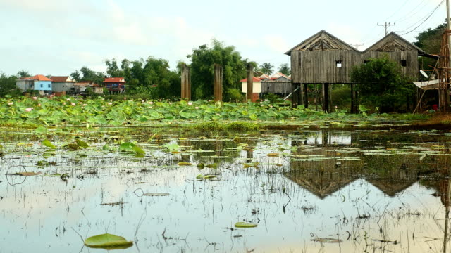 Lotuses on a pond with stilt houses in the background video