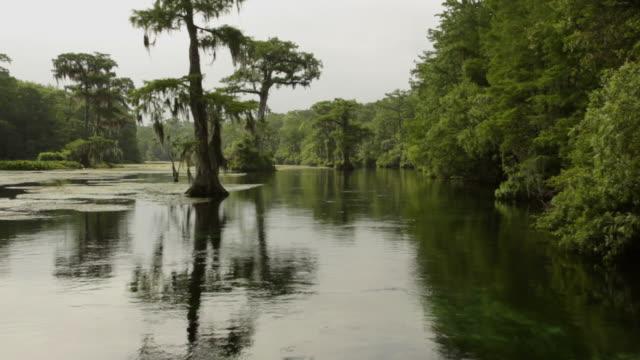 Louisiana bayou video