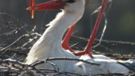 Love and Stork - ЛЮБОВЬ И АИСТЫ video