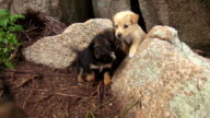 lovely dog puppies video